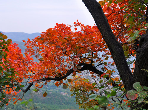 Top 5 Places to Enjoy Great Views of Red Maple Tree Leaves