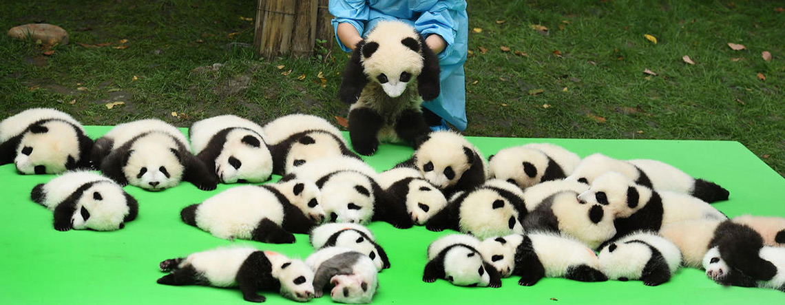 6 Days Chengdu Amp Jiuzhaigou Tour Chengdu And Jiuzhaigou Tour