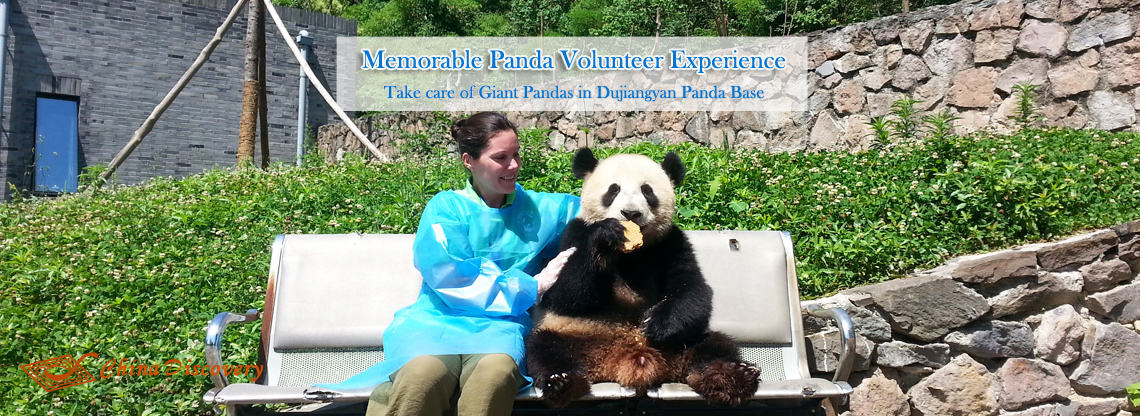 Dujiangyan Panda Photo