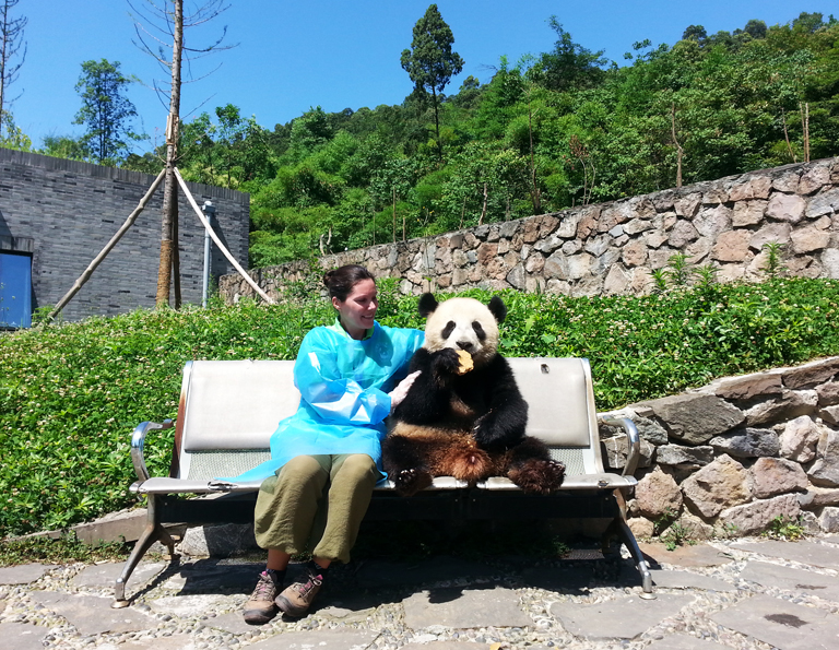 Hug a Cute Giant Panda in Dujiangyan