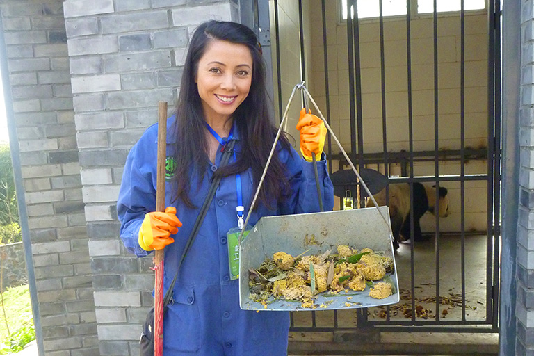 Panda Volunteer Work to Clean Panda Enclosure