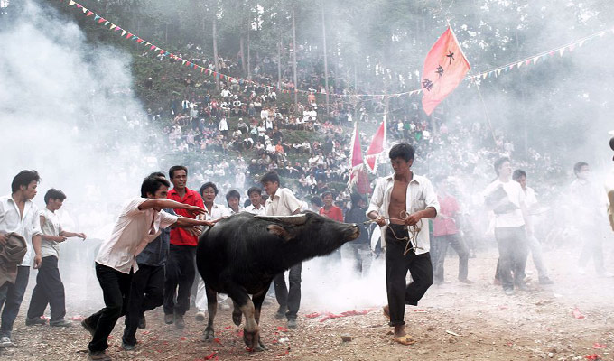 Dong's Bullfighting Festivalou