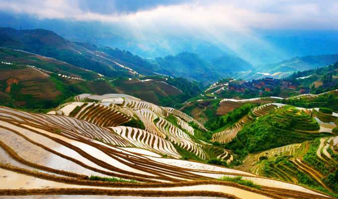 Longji Rice Terrace in Spring