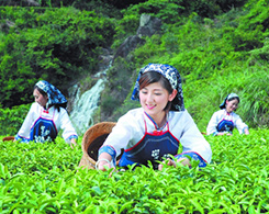 Fujian Tea Culture