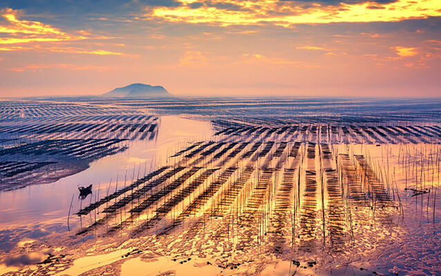 Kelp Farms on the Mudflats of Beiqi Village