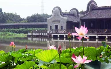Sanshui Lotus World