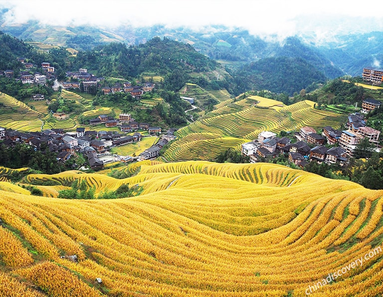 Jinkeng Large-scale Thousand-layer Terraces Golden View