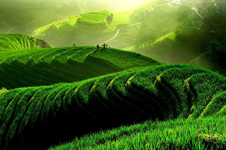 Green Longji Rice Terrace (June ~ August)