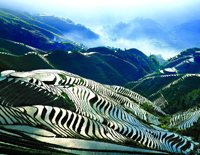 Beautiful Longji Rice Terrace