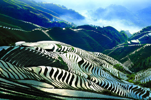 Longsheng Rice Terrace Fields