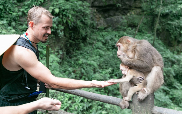 Play with wild monkey in Mount Emei (Be careful, they may be aggressive)