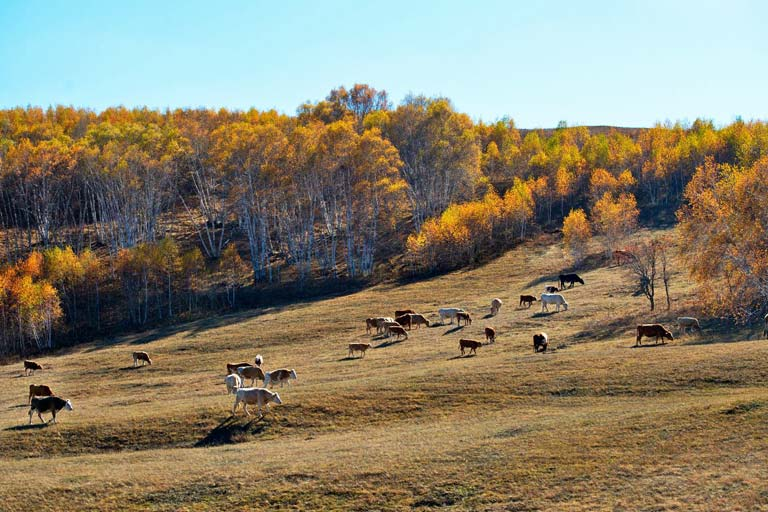 Hohhot Things to Do & Attractions - Inner Mongolia Hadamen National Forest Park