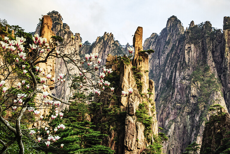 Huangshan Yellow Mountain Spring Weather