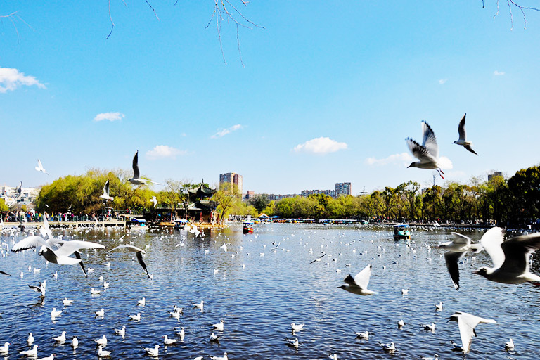 Kunming Green Lake