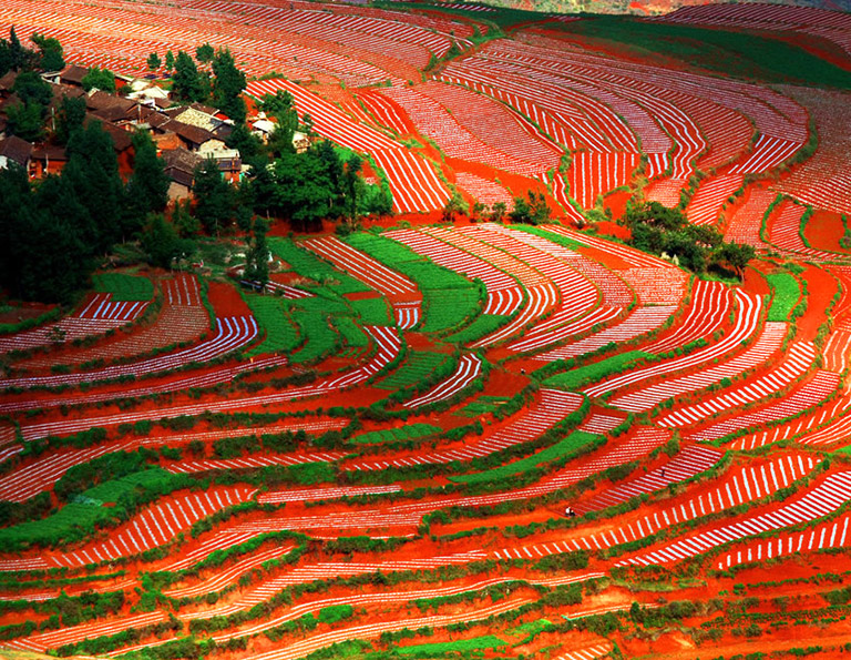 Dongchuan Red Land Amazing Color in May