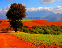 Dongchuan Ancient Tree View