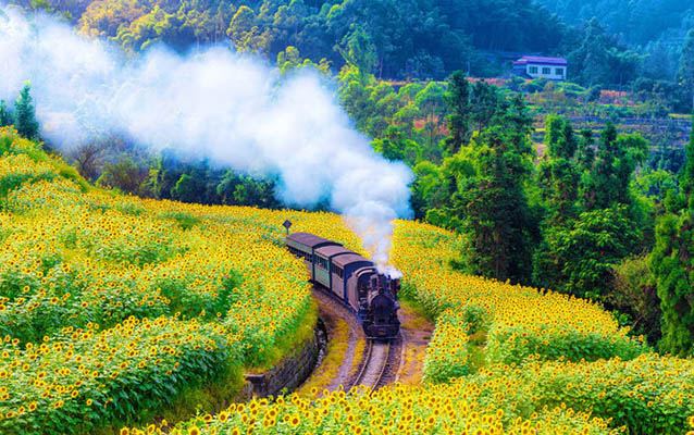 2 Days Leshan Giant Buddha Visit with Jiayang Steam Train Experience