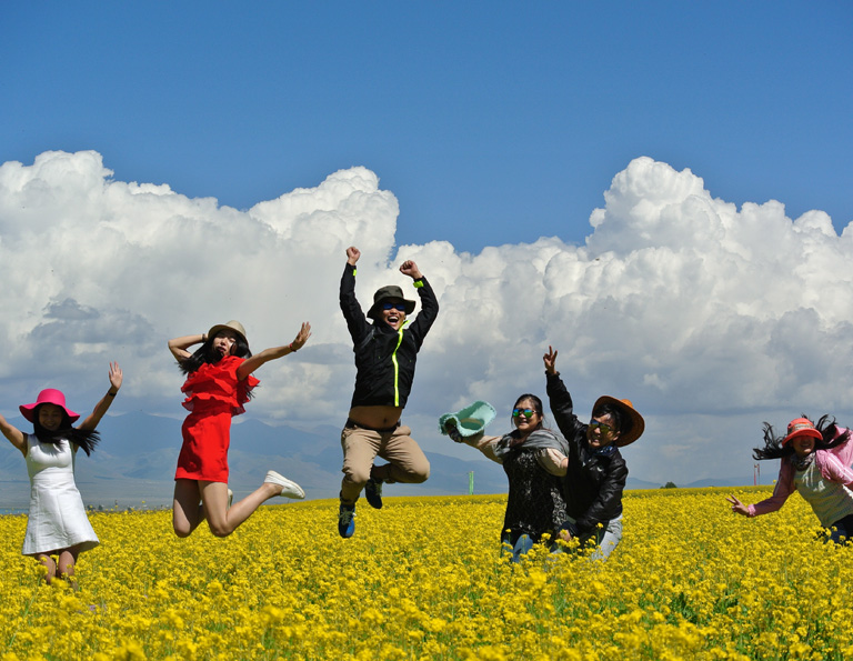 Qinghai Lake Rape Flower