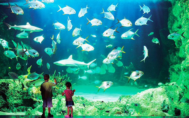 Shanghai Ocean Aquarium Family Tour