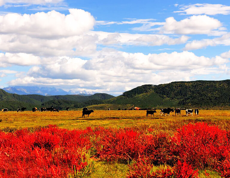 Autumn Scenery of Shangri-La