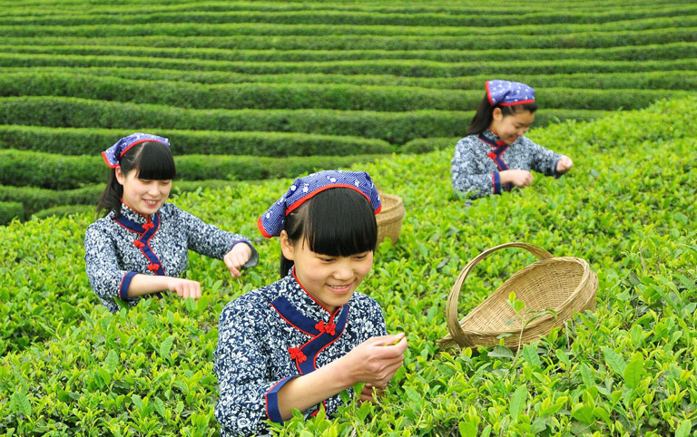 Mengdingshan Tea Culture