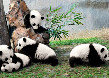 8 Days Silk Road Tour with Chengdu Panda