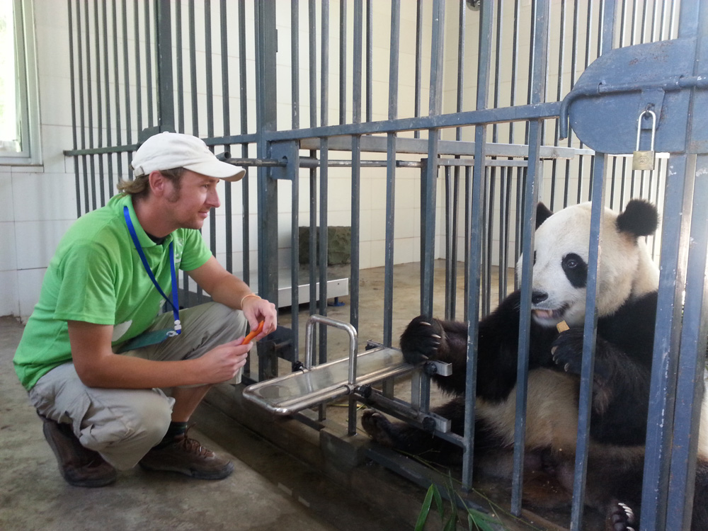 Love Panda Feeding at Dujiangyan Panda Base
