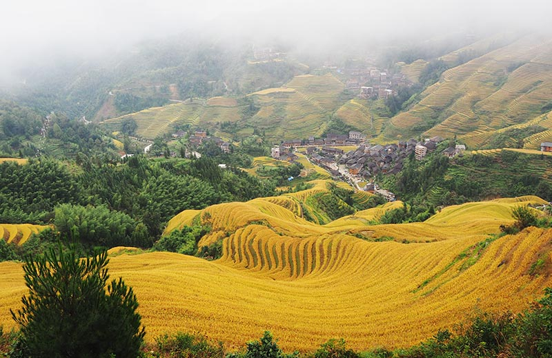 The Jinkeng Rice Terraces - Site for Most Awesome Longji Photos