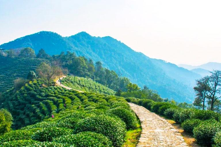 hangzhou longjing tea village  visit dragon well tea