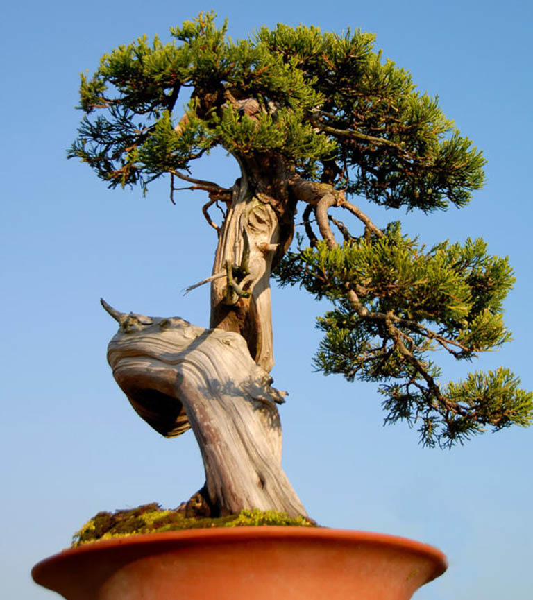 Huizhou Bonsai