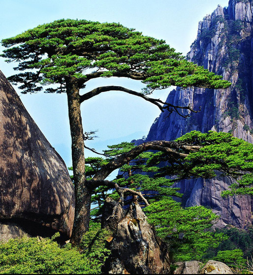 huang shan buddhist singles A buddhist mountain in modern china  hua shan or the strangely formed and majesty rocks of huang shan,  emei shan itself is one of the main buddhist .