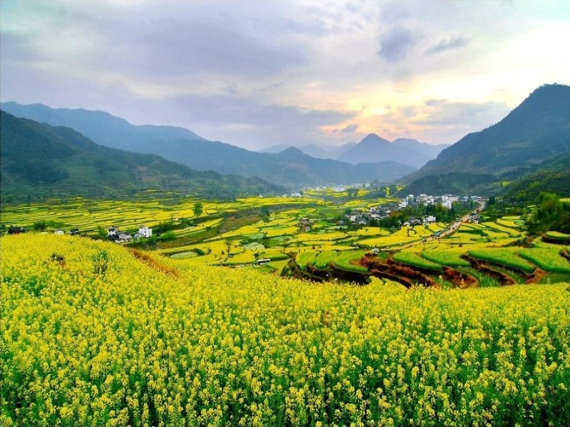 Spring View in Southern China