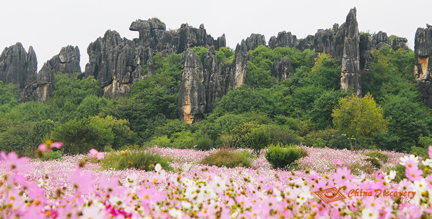 China Trip - Stone Forest