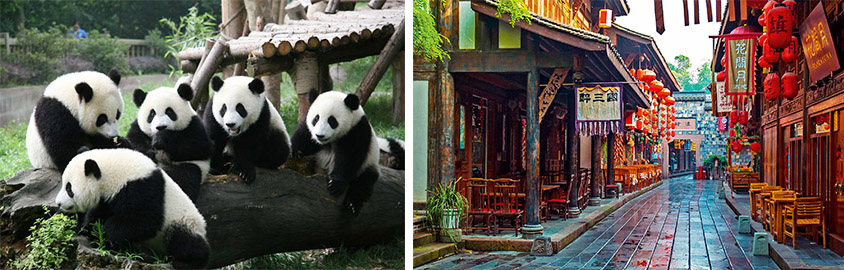 Dujiangyan Panda Base and Chengdu Jinli Old Street, Tour Customized by Leo