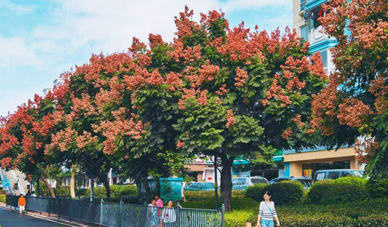 Visit Zhongshan Road in Autumn