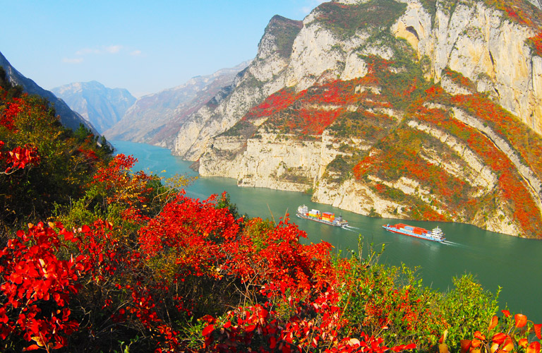 Winter Red Leaves at Three Gorges