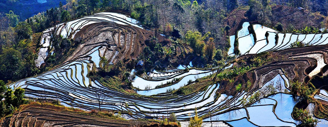 Yuanyang Rice Terrace Tour