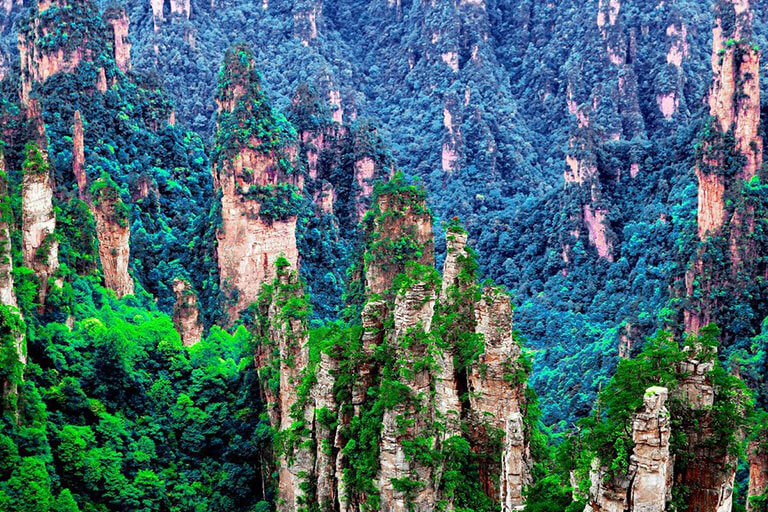 Emerald Forest at Tianzi Mountain