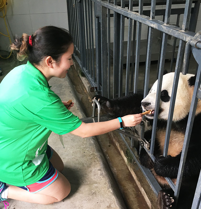 Panda Volunteer in Dujiangyan Panda Base