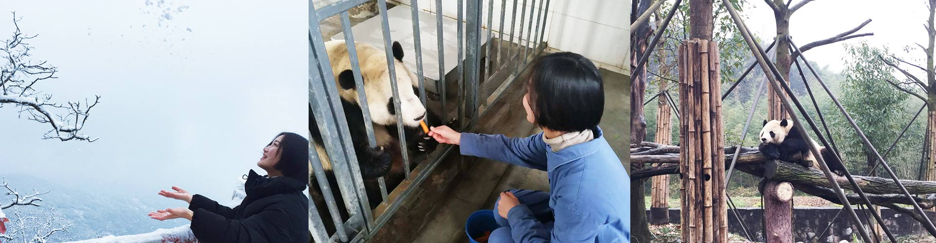 2 Days Dujiangyan Panda Volunteer Experience with Mt. Qingcheng