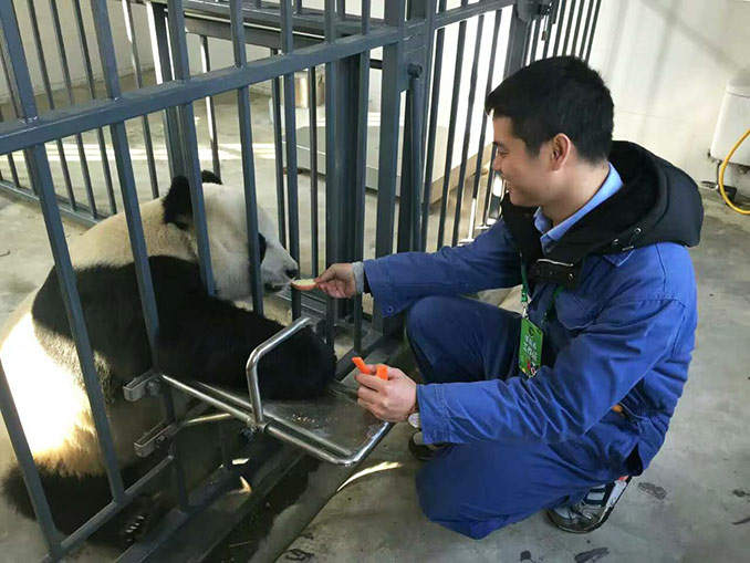 Feed the Panda at Dujiangyan Panda Base