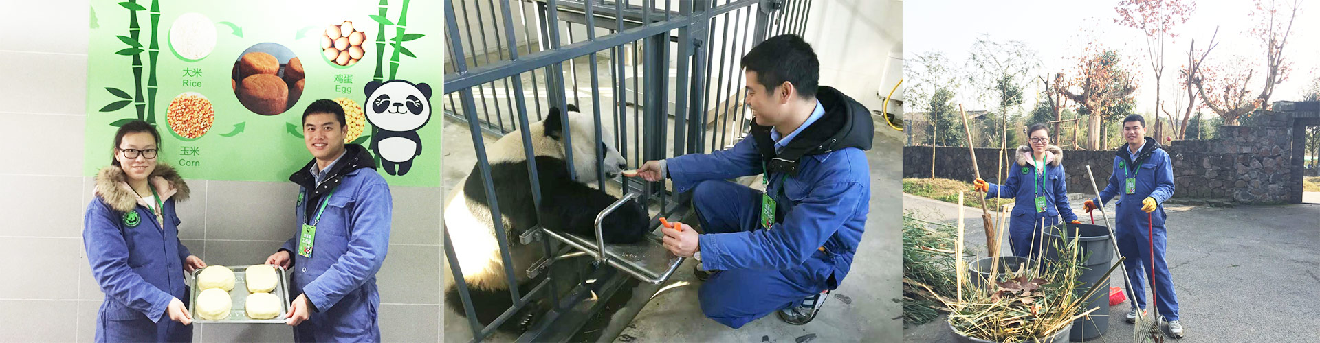 Lifetime Experience with Pandas at Dujiangyan Panda Base