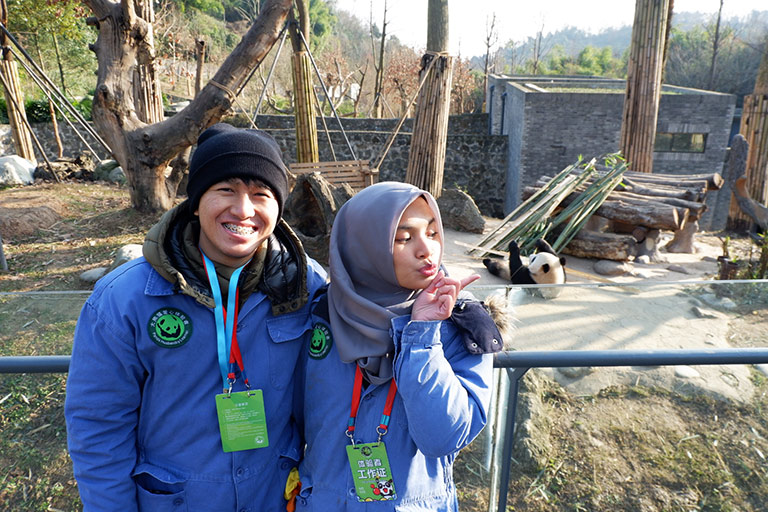 Panda Volunteer Tour at Dujiangyan Panda Base