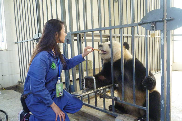 Panda Volunteer Tour at Dujiangyan